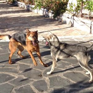 Snill ulv leker med tennene ute